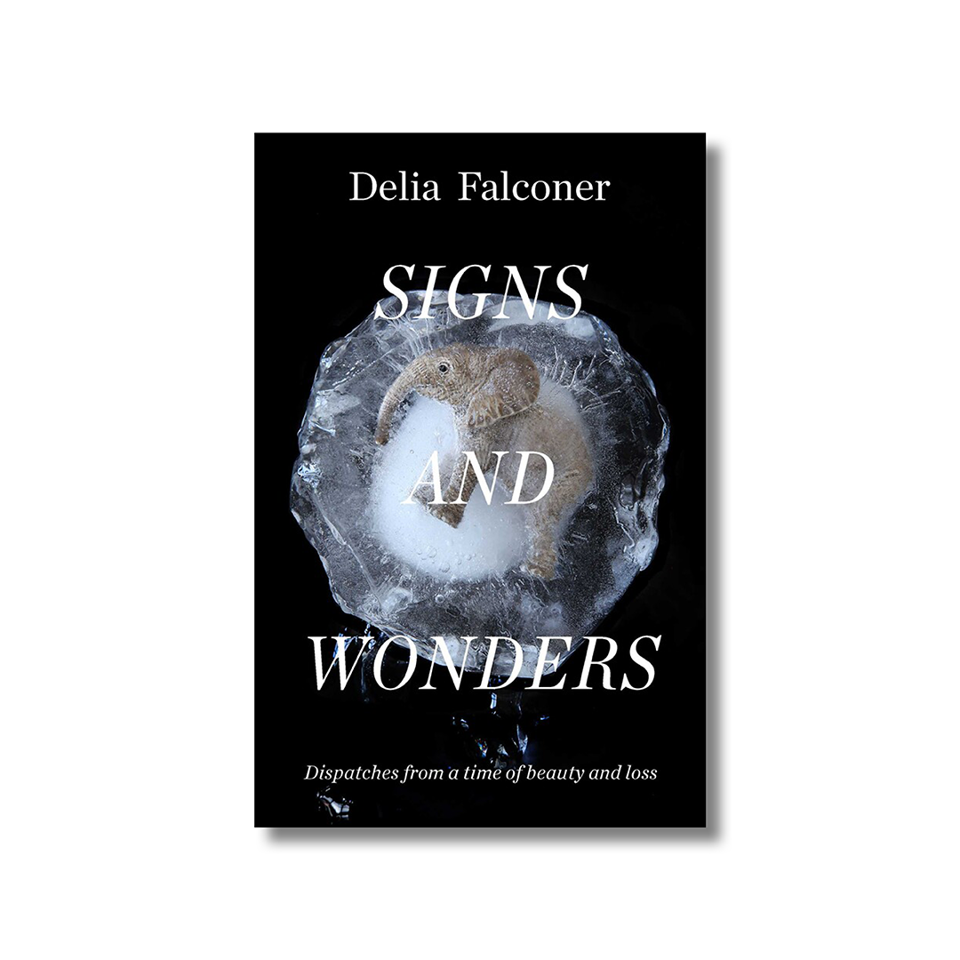 Front cover of Delia Falconer's 'Signs and Wonders'. In the foreground is the title in a capitalised and italicised white serif font. In the background is a close-up image of a frozen baby elephant against a black background.